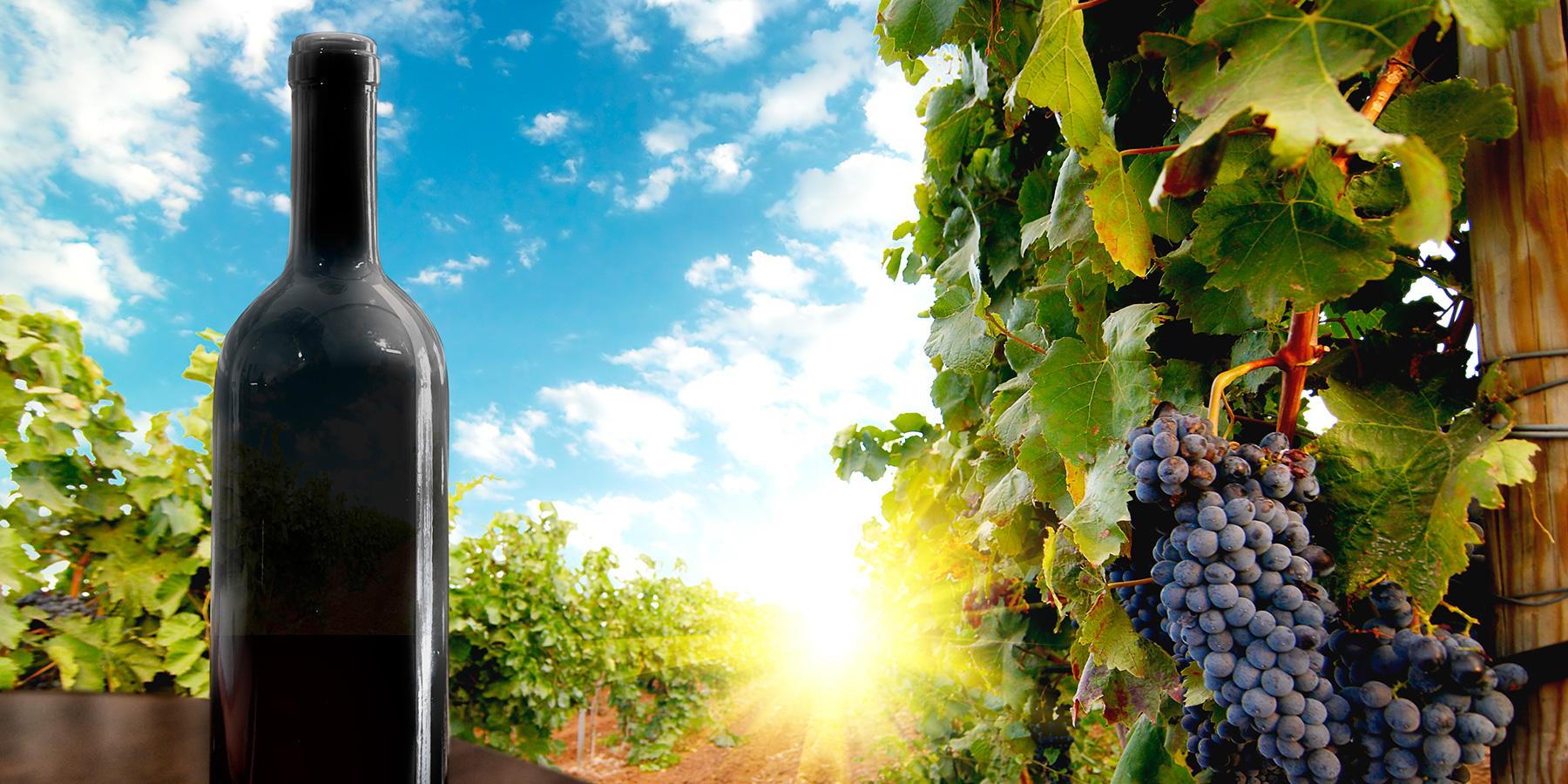 wine_03_1800x900